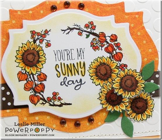 Sunny_Harvest_Sunny_Day_Close_Sept2014