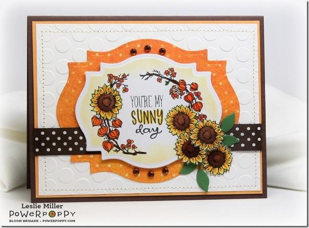 Sunny_Harvest_Sunny_Day_Sept2014