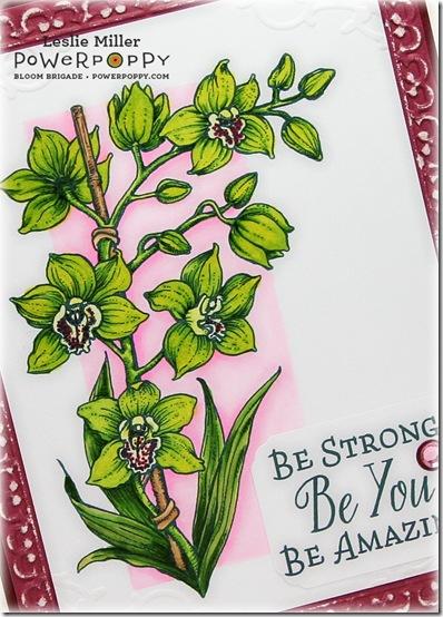 OrchidsRockStrongCloseJan2015